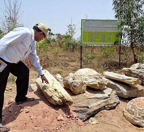 Steeped in history:  Mancherial Divisional Forest Officer B. Prabhakar observing a Jurassic-era tree fossil at the nature park.– Photos: S. Harpal Singh